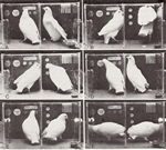 Photo of Symbolic Communication Between Two Pigeons